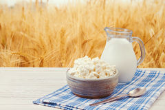 Milk and cottage cheese over wheat field background Stock Photo