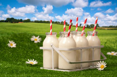 Milk In The Countryside Stock Image