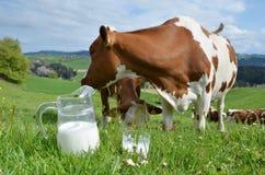 Milk and cow. S. Emmental region, Switzerland royalty free stock photos