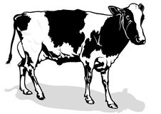 Milk Cow Stock Image