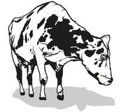 Milk Cow Royalty Free Stock Photography