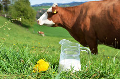 Milk and cows Royalty Free Stock Image
