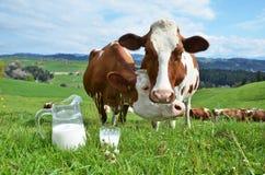 Milk and cows. Emmental region, Switzerland stock image