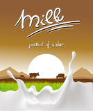 Milk design with milk splash, cow and sunset Stock Image