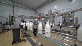Milk factory conveyor 2. Transport line about the spill of milk, kefir, yogurt at the plant