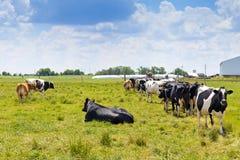 Milk Farm Stock Images