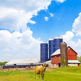 Milk Farm Royalty Free Stock Photos