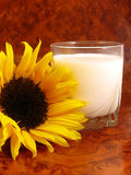 Milk and flower. Sunflower and a glass of milk on brown surface stock photos