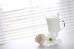 Milk and garlic. Milk in the glass and fresh garlic / copyspace Stock Photo