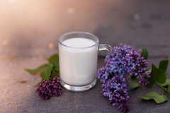 Milk glass with lilac flower. Outdoor Stock Photo