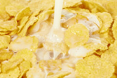 Milk hällde på cornflakes Fotografering för Bildbyråer