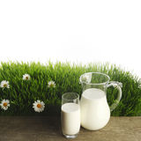 Milk jug and glass on flower field Royalty Free Stock Image