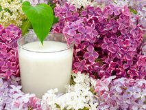 Milk and lilac Stock Photo