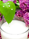 Milk and lilac Royalty Free Stock Images