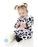 Milk-Loving Cow Baby Royalty Free Stock Image