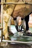 Milk machine close up Royalty Free Stock Image