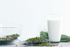 Milk from Mung Bean on white.  Royalty Free Stock Images