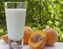 Milk and peaches. Glass of milk and a couple of peaches on a white table. Blurred scenery of the countryside in the background royalty free stock images