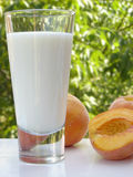 Milk and peaches. Glass of milk and a couple of peaches on a white table. Blurred scenery of the countryside in the background royalty free stock image