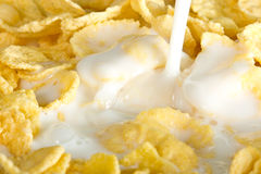 Milk pouring on a cornflakes Royalty Free Stock Images