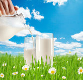 Milk pouring into glass in grass Stock Images
