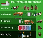 Milk production process vector illustration