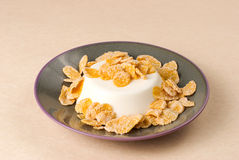 Milk pudding with sweet crisp Stock Photos