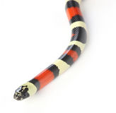 Milk snake Stock Photos