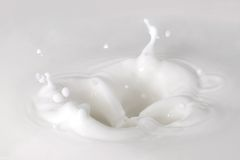 Free Milk Splash Royalty Free Stock Photo - 3071415