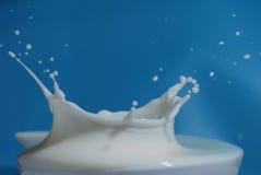 Milk Splash royalty free stock image