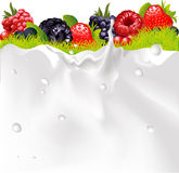 Milk Splash Background, Fruit Berries And green Grass Stock Photos