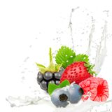 Milk splash berry Royalty Free Stock Image