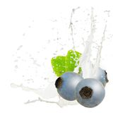 Milk splash berry Royalty Free Stock Photos