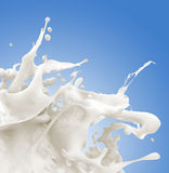 Milk splash. On blue background Stock Images