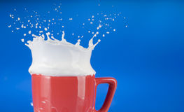 Milk splash out of red cup Royalty Free Stock Photo
