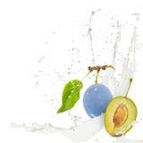 Milk splash plum Stock Photography