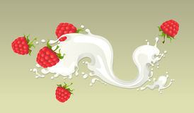 Milk splash with raspberries Stock Images