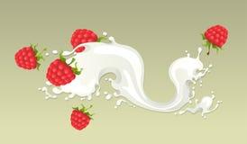 Milk splash with raspberries. On light background Stock Images