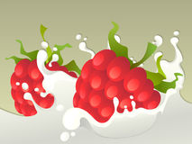 Milk splash with raspberries. Royalty Free Stock Photography
