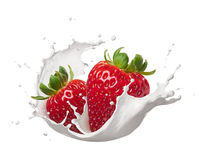 Milk splash with strawberries. Strawberries with milk splash isolated on white royalty free stock photos