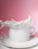 Milk splashes. In a white cup Royalty Free Stock Photography