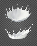Milk splashes and drops. 3d Realistic white liquid crown. Vector drink on transparent background. Natural dairy products.  Stock Image