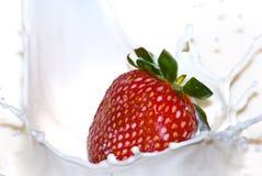 Milk strawberry splash. Motion of an strawberry dropped into milk causing splashes Stock Photos