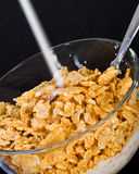 Milk Stream. Ing into a bowl of cereal Royalty Free Stock Photography