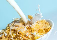 Milk stream pouring into a bowl with сornflakes close-up. Royalty Free Stock Photo