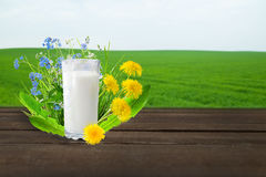 Milk and sunny spring field Royalty Free Stock Image