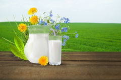 Milk and sunny spring field Stock Photos