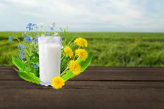 Milk and sunny spring field Stock Image