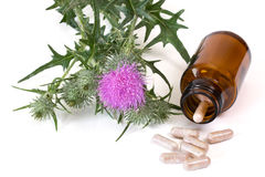 Milk thistle capsules Royalty Free Stock Image