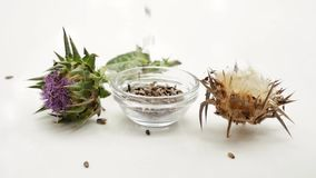Milk Thistle Seeds falling to bowl. Dried and fresh Milk thistle seeds falling in glass bowl. Milk thistle blossom and seeds. Isolated on white background stock video footage